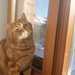Потерялся рыжий котик, Тюмень