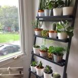 Гостиница для комнатных растений, Тюмень