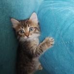 Котенок, Тюмень