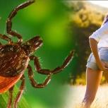 Обработка от клещей и комаров и т.д, Тюмень