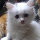 Отдам котят даром, Тюмень