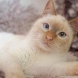 Молоденький котик Томас ищет семью, Тюмень