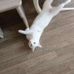 Отдам в хорошие руки кошку, Тюмень