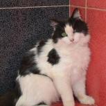Кошка Лайма - пушистый комочек на счастье, Тюмень