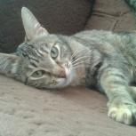 Тигровая кошечка Катя ищет дом, Тюмень