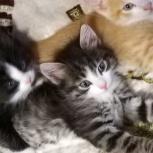 Котята в добрые руки, Тюмень
