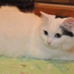 Ясноглазая кошечка Алиса, Тюмень