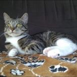 Котик ищет дом, Тюмень