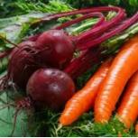 Овощи с дачного участка, Тюмень
