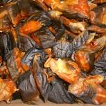 Рыба сом, Тюмень