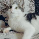 Молоденькая кошечка Шанель ищет дом, Тюмень