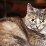 Трёхцветная кошечка Верона ищет дом, Тюмень