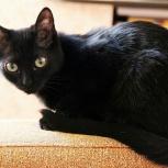 Молодая кошечка Юта ищет дом, Тюмень