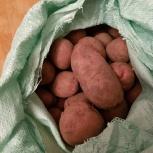 Картофель с доставкой до квартиры сетка 28-30 кг, Тюмень