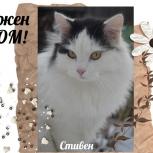 Кот ищет дом, Тюмень