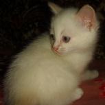 Белый котик- Максимыч, Тюмень