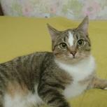 Взрослый котенок, кошка  7 месяцев., Тюмень