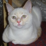 Котёнка подарю, Тюмень