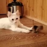 Отдам котёнка в добрые руки, Тюмень