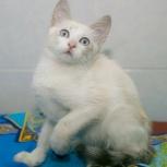 Котёнка Мануэль ищет семью, Тюмень