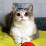 Котёнка Ася ищет семью, Тюмень