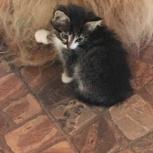 Котята ищут дом!, Тюмень
