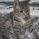 Тирговый котёнок-девочка Буся, Тюмень