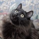 Пушистый котик Марсик, Тюмень