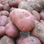 Продам картофель, Тюмень