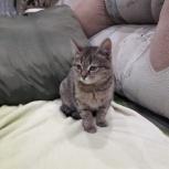Найден котёнок, Тюмень