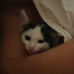 Супер мега ласковый котенок, Тюмень