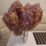 продам гортензии (сухоцвет), Тюмень