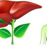 Гепатит С, методическое руководство, Тюмень