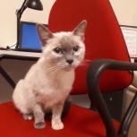 Я - Маргошка, расчудесная кошка, Тюмень