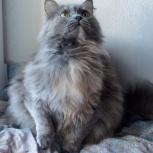 Молодая трёхшёрстная кошечка Леся ищет дом, Тюмень