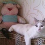 Котёнок-подросток Сима, Тюмень