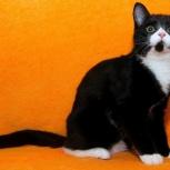 Скромная котёнка мышка, Тюмень