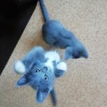 Котята в заботливые руки, Тюмень