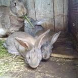 Крольчата, Тюмень