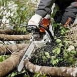 Спил (распил, валка) деревьев, обрезка веток в Тюмени, Тюмень