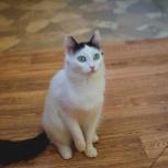 молодая кошечка Пушинка - задорный семейный спутник, Тюмень