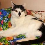 Оригинальный котик Мартин ищет семью, Тюмень