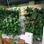 Фитомодуль с живыми растениями и автополивом, Тюмень