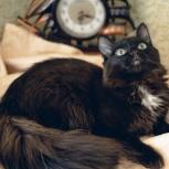 Кофейная котёнка Марфа ищет семью, Тюмень