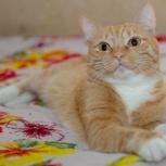 Тигро - солнечная кошечка Мила ищет семью, Тюмень