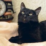 Молодая кошечка-пантерка Люся ищет дом, Тюмень