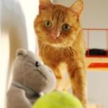 Молодой солнечно-рыжий котик Рыжик, Тюмень
