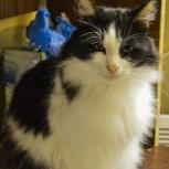 Пушистый сибирский котик Болик ищет семью, Тюмень
