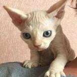 котята, Тюмень