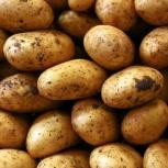 Предлагаем картофель оптом. Сорта: Розара Ред Скарлет Прямые поставки., Тюмень